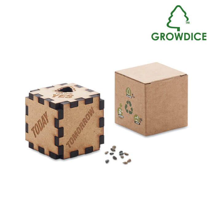 dice-with-pine-seeds-6227